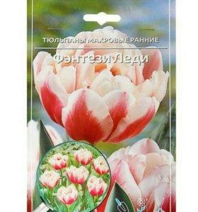 Тюльпаны люковицы