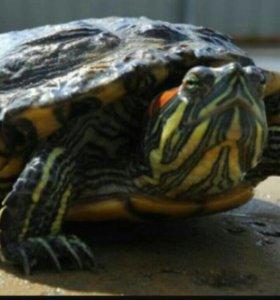 Черепахи и аквариум с кормом