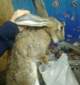 Отдам всех кролей