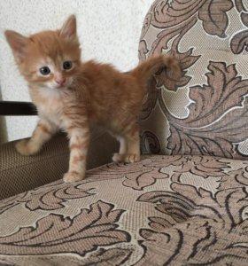 Отдам в хорошие руки котенка