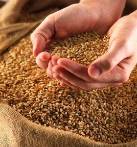 Частные объявления зерно комбикорм в казани из рук в руки н.новгород частные объявления оргтехника