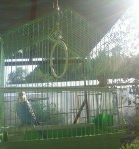 Срочно продам попугая с клеткой