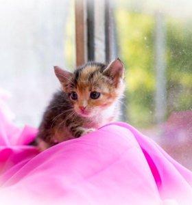 Котенок ~4 недели