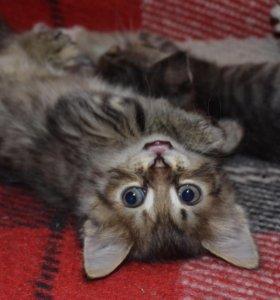 Котенок в дар. Ляля