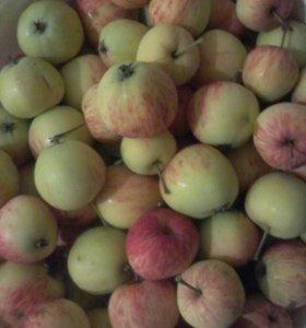 Яблоки заготовки, витамины Срочно Почти даром