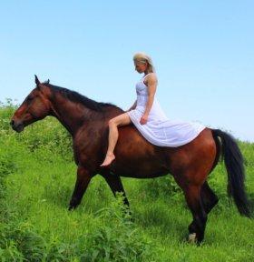 Конь в пол аренды
