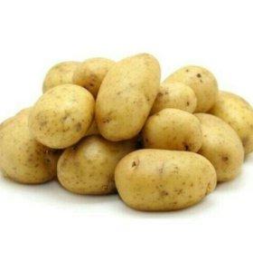 Картофель жёлтый