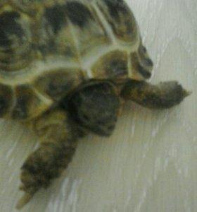Черепаха,аквариум.