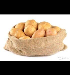 Продажа картофеля