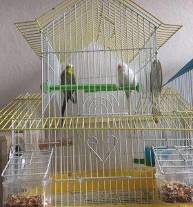 Попугаи и клетка