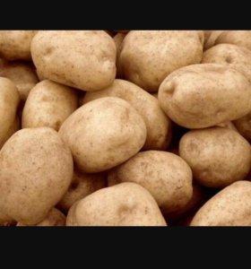 Краснинский картофель