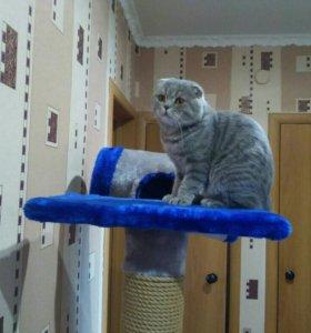 Кот британец 1,5 года. Документы в наличии
