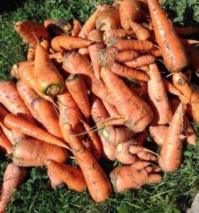 Морковь 🥕/ морковка / из своего участка