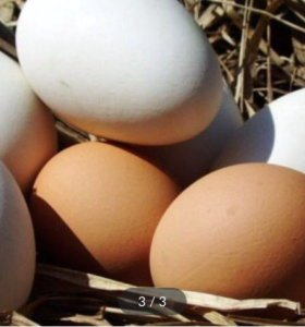 Яйца куриные и перепелиные пищевые