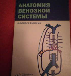 Анатомия венозной системы