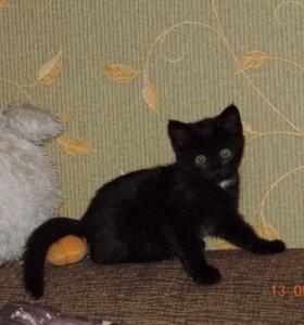 Котёнок Полли