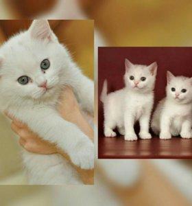 Кошечки,беленькие