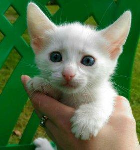 Синеглазые котята