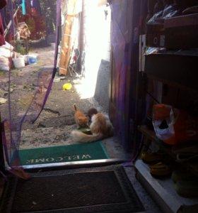 Кошка крысоловка