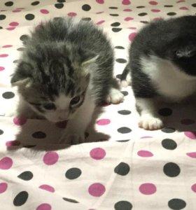 Четверо очаровательных котят