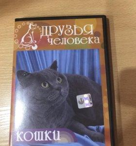 Диск про кошек