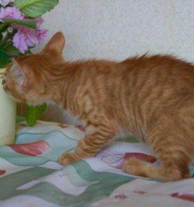Котёнок рыженький