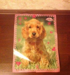 Плакат с кроликом и собакой