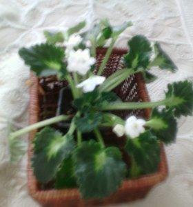 домашнии цветы