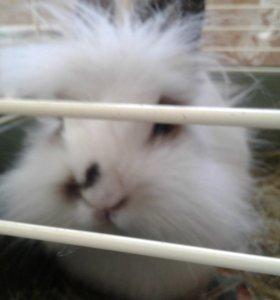 Продам крольчиху с клеткой