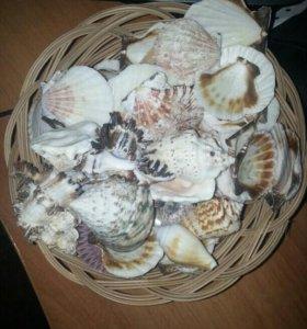Набор ракушек в плетенной корзинке