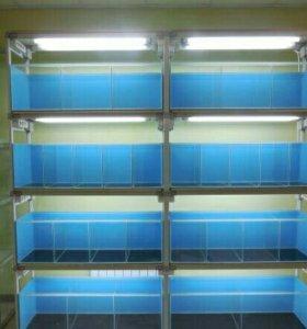Стойка-витрина для отдела аквариумистики