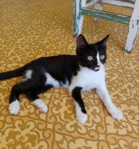 Кошечка, 3.5 месяца