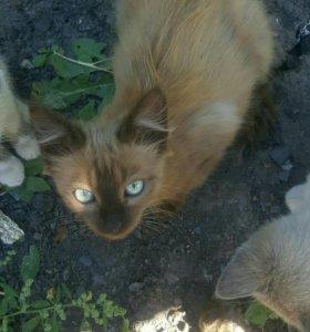 Котята,кушают сами, очень активные