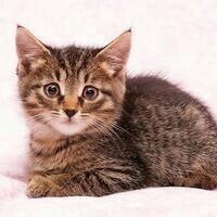 Котёнок Веня