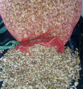 Продам семена чеснока