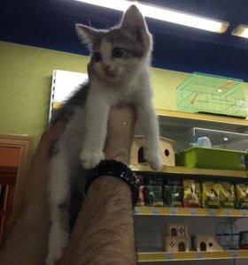 Котёнок в добрые ручки!
