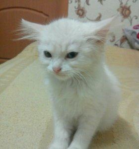 Молодая кошечка. Даром