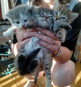 Отдам 3 котенка в добрые руки