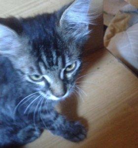 Отдам котят даром.1-кот,2-кошка