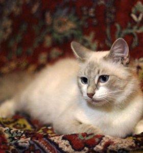 Кошечка Даша