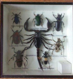 Насекомые жуки