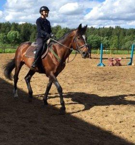 Конный спорт/прокат лошадей