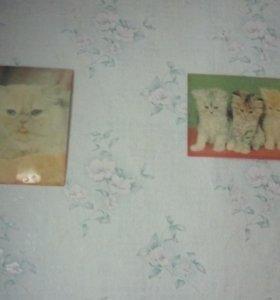 Продам 2 картинки с котятами