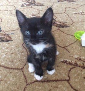 Котёнок в добрые ручки