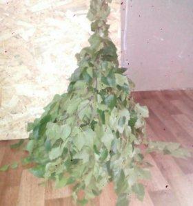 Веники березовые(оптом 50р)