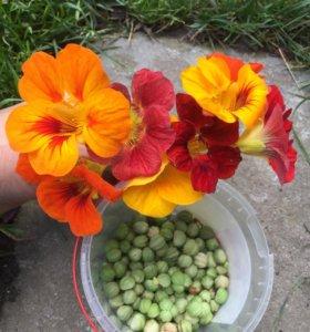 Семена настурции плетистой смесь