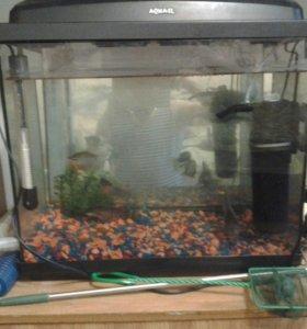 Аквариум 60 л с рыбками.