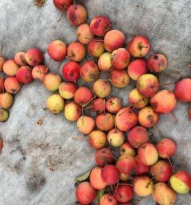 Яблоки ведро 10л