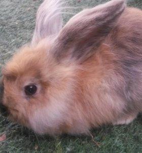 Карликовые декоративные кролики