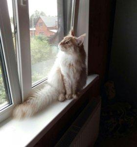 Породистые котята от начинающео